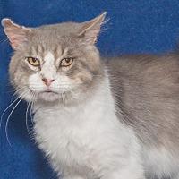 Adopt A Pet :: Ziggy - Elmwood Park, NJ