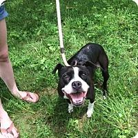Adopt A Pet :: Abby - Arden, NC