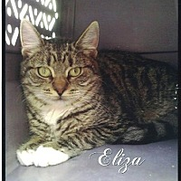 Adopt A Pet :: Eliza - Calimesa, CA
