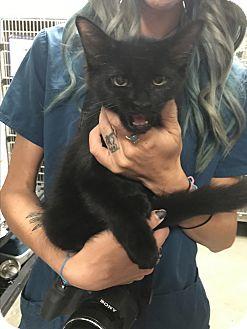 Adopt A Pet :: Maui  - Henderson, NC