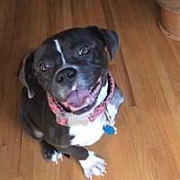 Adopt A Pet :: Fannie - McCalla, AL