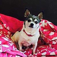 Adopt A Pet :: Kya - South Bend, IN