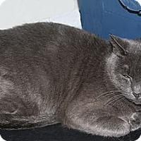 Adopt A Pet :: Ivy - Torrance, CA