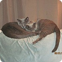 Adopt A Pet :: Candy and Shadow - Laguna Woods, CA