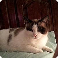 Adopt A Pet :: Cynthia - Portland, ME
