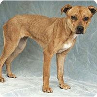 Adopt A Pet :: Dora - Chicago, IL