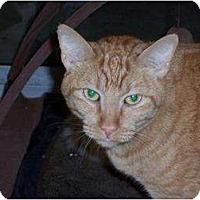 Adopt A Pet :: Richard - El Cajon, CA
