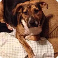 Adopt A Pet :: Sissy - Hollis, ME