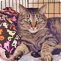 Adopt A Pet :: Tiger - Ocean City, NJ