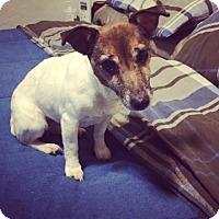 Adopt A Pet :: Buttons In OKC PENDING - Oklahoma City, OK