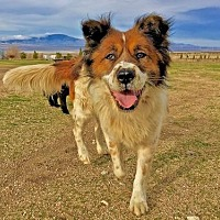 Adopt A Pet :: Mix Up - Lancaster, CA