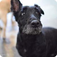 Adopt A Pet :: Coco - San Diego, CA