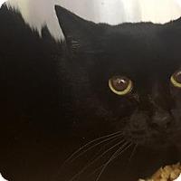 Adopt A Pet :: Baby 170691 - Atlanta, GA