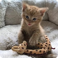 Adopt A Pet :: Charlie (FC=kw) - Lovingston, VA