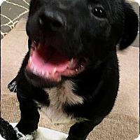 Adopt A Pet :: Finn - Austin, TX