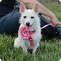 Adopt A Pet :: Suki - Matthews, NC
