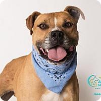 Adopt A Pet :: WOLVERINE - Camarillo, CA