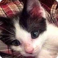 Adopt A Pet :: NACHO - Missoula, MT