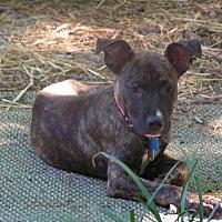 Adopt A Pet :: Louie - sanford, NC