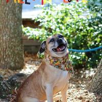 Adopt A Pet :: Roscoe - Charleston, SC