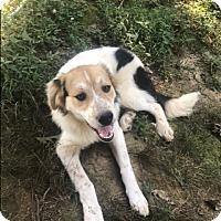 Adopt A Pet :: Jack - Memphis, TN