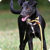 Adopt A Pet :: Dixie - New City, NY