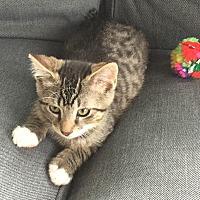 Adopt A Pet :: Rhett - Toronto, ON