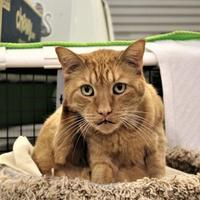 Adopt A Pet :: Mark - Morgan Hill, CA