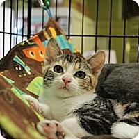 Adopt A Pet :: Sarah - Santa Monica, CA