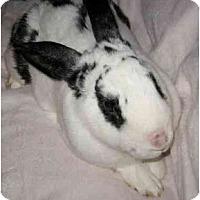 Adopt A Pet :: Bubba - Santee, CA