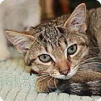 Adopt A Pet :: Filly (PP) - Little Falls, NJ