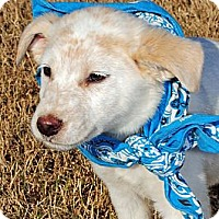 Adopt A Pet :: Troy - Gonzales, TX
