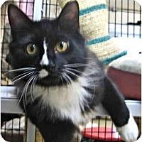Adopt A Pet :: Shades of Black & White - Deerfield Beach, FL