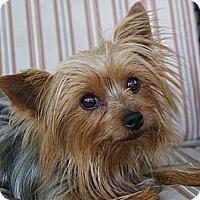 Adopt A Pet :: Zoe - CAPE CORAL, FL