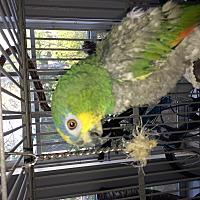 Adopt A Pet :: Neil Armstrong - Punta Gorda, FL