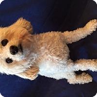 Adopt A Pet :: Murphy - Rancho Mirage, CA