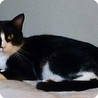 Adopt A Pet :: Anastasia - Farmington, AR