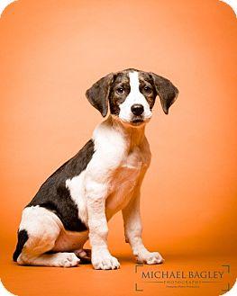 Labrador Retriever Mix Dog for adoption in Norwalk, Connecticut - Lancaster - MEET ME