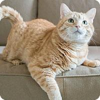 Adopt A Pet :: Jordan - Chicago, IL