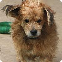 Adopt A Pet :: Hedwig - Norwalk, CT