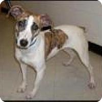 Adopt A Pet :: Quinn - Kendall, NY