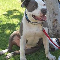 Adopt A Pet :: King Arthur - West Los Angeles, CA