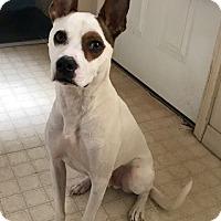Adopt A Pet :: Lucky - Salem, NH
