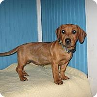 Adopt A Pet :: Evey - KANNAPOLIS, NC