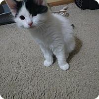 Adopt A Pet :: Daisy A428968 - San Antonio, TX
