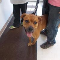 Adopt A Pet :: dozer - Circleville, OH