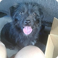 Adopt A Pet :: Evie - Antioch, CA