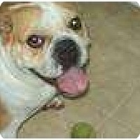 Adopt A Pet :: Lacy Bug - conyers, GA