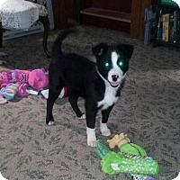 Adopt A Pet :: Gilbert - Denver, IN