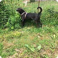 Adopt A Pet :: Kingo - Hohenwald, TN